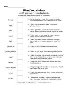 Plant Vocabulary — Instant Worksheets